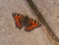 butterfly pavement