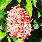 """""""Flowers in bloom"""" by strangefrute"""