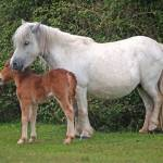 """""""mother and foal"""" by mikeinfrance"""
