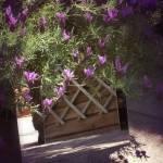 """lavendar"" by NMB-2009"