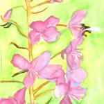 """Fireweed Bee"" by wolcott"