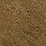 """Beach Texture 4"" by IanGill"