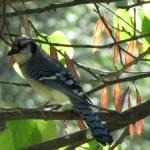 """IMG_0294_1"" by birdphotosandmore"