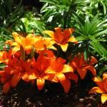 """Orange flowers"" by birdphotosandmore"