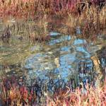 """Wetlands Abstract"" by ChrisMarshall"