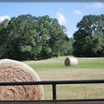 """Field of Bales"" by PhotosbyTeia"