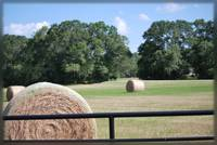 Field of Bales