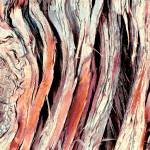 """Bark Abstract"" by BrianMadden"