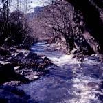 """""""Water Stream"""" by EnjoyART"""