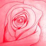 """""""dotted rose"""" by TCRAWFORD"""