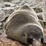 """Having a nap"" by magda-maciek"