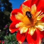"""""""Flower Bee"""" by casper"""