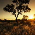 """Kalahari molopo-028"" by delende"