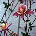 """Alaskan Flower"" by raskoff"