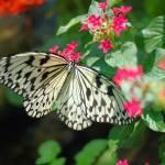"""butterfly 2"" by imagineit"