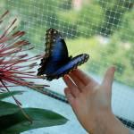 """butterfly 4"" by imagineit"