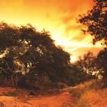"""Limpopo_Lipadi_012"" by delende"