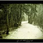 """Seductive path I!"" by CyrusMafi"