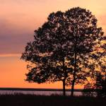 """""""A Tree at Sunset"""" by robbdee40"""