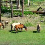 """Wild Mustangs"" by azvirtual"