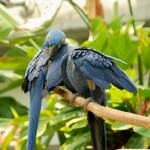 """2 macaws 1"" by imagineit"