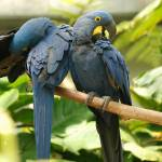"""2 macaws 2"" by imagineit"