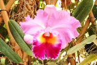 Shawns Orchid Shots From Palm Beach Orchid Soceity