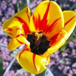 """London Spring Flower"" by spaffordj"