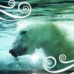 """polar bear1"" by christypoore"