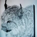 """""""Canadian lynx"""" by Tifffanilodgeart"""