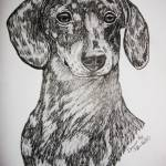 """dachshound"" by Tifffanilodgeart"