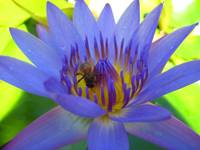 Blue flower and a bee.