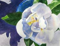 Magnolia in Blue Bowl
