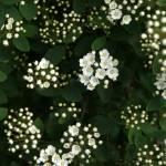 """""""Little White Gems"""" by chuietta"""