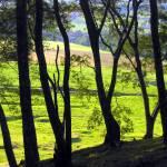 """""""Árvores"""" by joaobambu"""