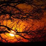 """endless branches endless sunsets"" by joaobambu"