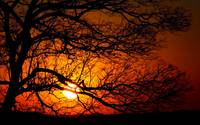 endless branches endless sunsets