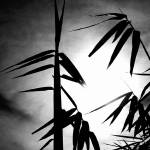 """My bamboos growing at night"" by joaobambu"