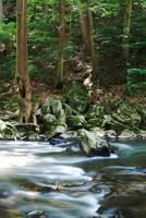 The Movement of the Wissahickon