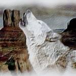 """""""Prairie Wolf"""" by Silverwolf"""