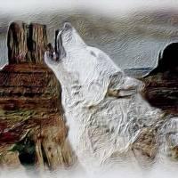 Prairie Wolf by Gary Miles