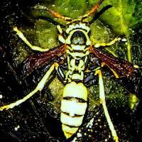 wasp creepy by Gary Miles