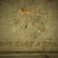 ALONG CAME A SPIDER by Gary Miles
