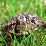 """Toad"" by imagesbykelly"