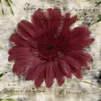 Red Gerbera Daisy 4 Art Prints & Posters by Melissa McGill