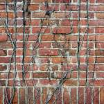 """Vine-covered brick wall"" by dkocherhans"