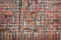 Vine-covered brick wall