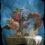 """Hydrangea and Shells"" by eckert"