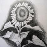 """""""Sunflower in Pencil"""" by sgodau"""
