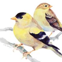 """Goldfinches"" by SharonRMorgio"